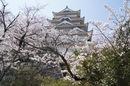 福山城と桜、街中の お花見スポットも風情ある静けさ