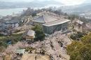 尾道 千光寺公園は 桜名所100選!風景と桜の両方を楽しめるお花見スポット