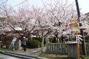 大崎下島 御手洗(広島)の天満神社の桜が見事!ももへの手紙 にも登場