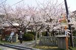 大崎下島 御手洗、沖友天満宮の桜が見事!ももへの手紙 にも登場