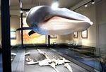 クジラに会える!庄原が海だった時代を感じられる、比和自然科学博物館
