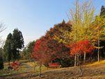 野呂山の紅葉、散策してお気に入りを見つけよう
