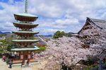 耕三寺の桜も満開に!尾道市生口島も春爛漫