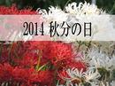 2014年秋分の日は9月23日、祖先敬う国民の祝日