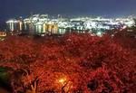 亀居公園の夜桜、大竹の工場夜景と瀬戸内海を望む