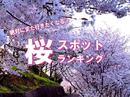 【編集部が本気で選んだ】広島の桜スポットランキング、ベスト10!