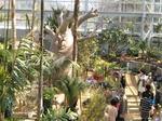 広島市植物公園に国内最大のバオバブ、大温室リニューアルで