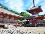 尾道 浄土寺は国宝の寺、白鳩の絵馬・鎖道登山コースも