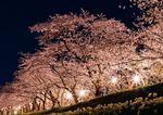 海田市駐屯地「桜まつり」で一般開放、花火の打上げも