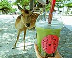 鹿のウンティー(UNTEA)宮島でタピオカをアレに見立て