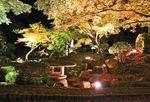 尾関山公園で紅葉が色付き始める、ライトアップもスタート
