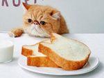 ねこねこ食パン!キュートな形で人気の高級食パン専門店、広島に初登場