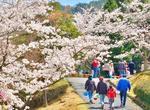 広島県緑化センターで「さくら祭り」3月20日からスタート