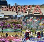 ひろしま はなのわ2020、花と緑で250日間 広島春のおもてなし