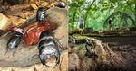 森の巨大虫かご「カブトムシドーム&クワガタハウス」がオープン