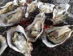 呉ポートピアで牡蠣の実演販売「呉に新たなカキ小屋を」