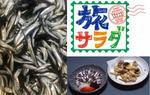 漁が解禁!広島の小イワシ、旅サラダで生中継
