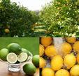 瀬戸内レモンの収穫体験が、宿泊付きで当たる!キリンレモン キャンペーン