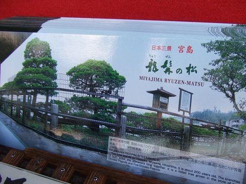 宮島 塔之岡茶屋の目の前にある 龍髯の松3