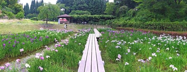 三景園の菖蒲園