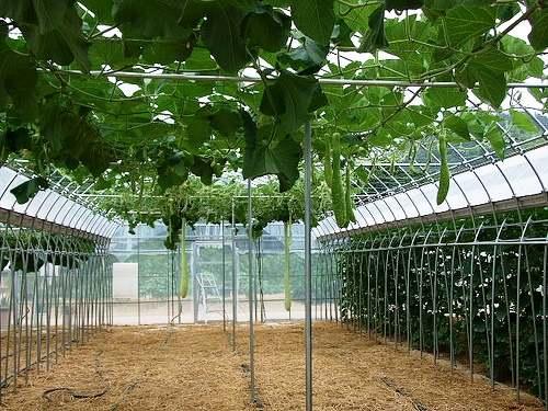 万田酵素の農場、万田びっくりファームを見学中