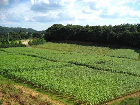 世羅高原農場 ひまわり祭 画像10