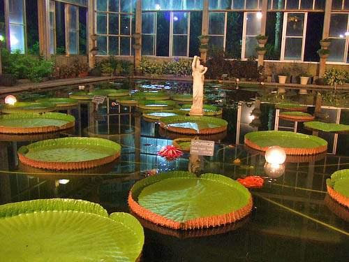 花と光のページェント 植物公園16