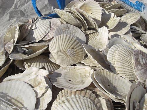 広島 牡蠣 画像3