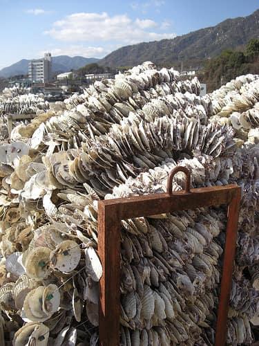 広島 牡蠣 画像2