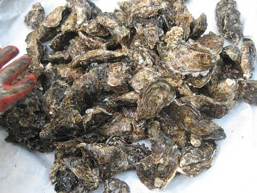 広島牡蠣 画像15