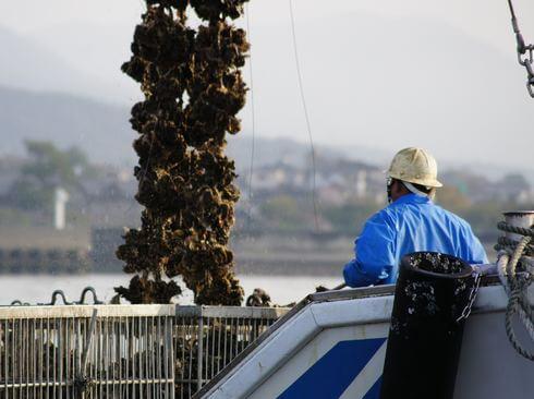 広島の牡蠣ができるまで。全国シェア1位「広島かき」