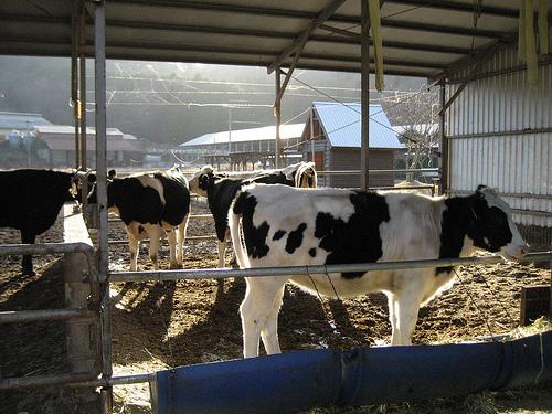 リストーロ 東城町の手作り牧場ジェラート