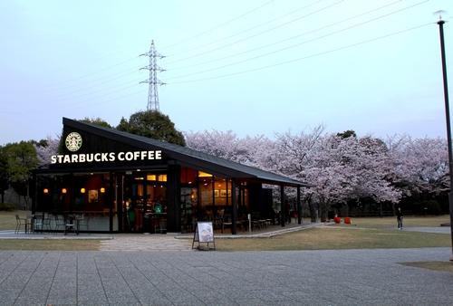 宮島SA 桜が満開