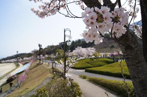 佐伯運動公園は街を見下ろす広大な敷地、お花見にも