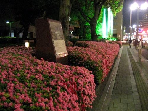 広島市役所のツツジ