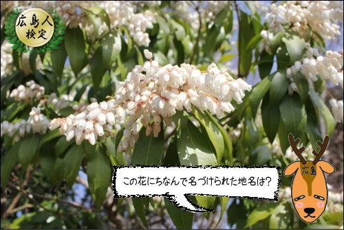 宮島でアセビ の花にちなんで付けられた地名は?【広島人検定】