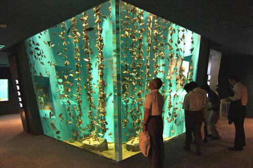 宮島水族館(みやじマリン)、リニューアル後の館内の様子