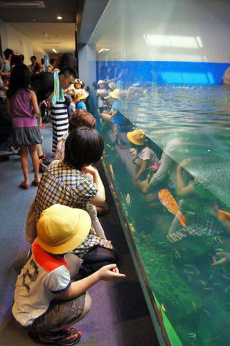 宮島水族館(みやじマリン) リニューアル後の画像15
