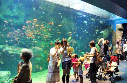 宮島水族館 涼しい