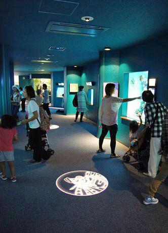 宮島水族館(みやじマリン) リニューアル後の画像17