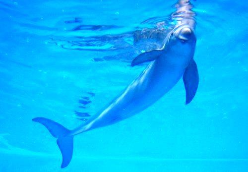 宮島水族館(みやじマリン) リニューアル後の画像2