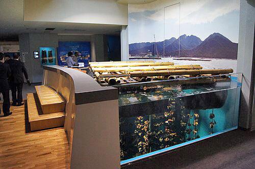 宮島水族館(みやじマリン) リニューアル後の画像3