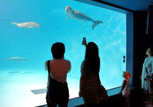 宮島水族館(みやじマリン) リニューアル後の画像7