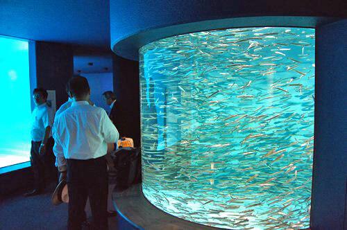 宮島水族館(みやじマリン) リニューアル後の画像9