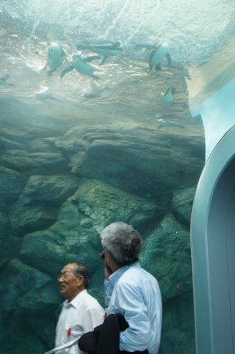 宮島水族館(みやじマリン)の ペンギン 画像3
