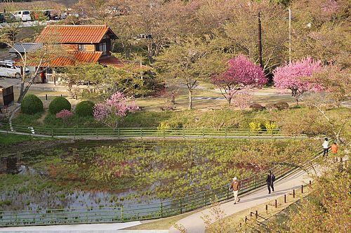 棲真寺公園 広島空港大橋を眺める展望台とお花見広場