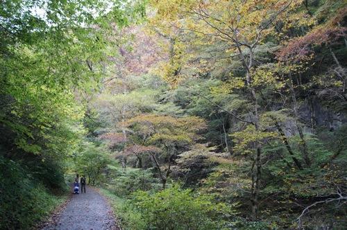 広島県 紅葉の名所 帝釈峡の画像12