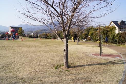 新宮中央公園(けん玉公園) 画像13