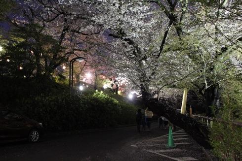 江波山公園の桜 画像5