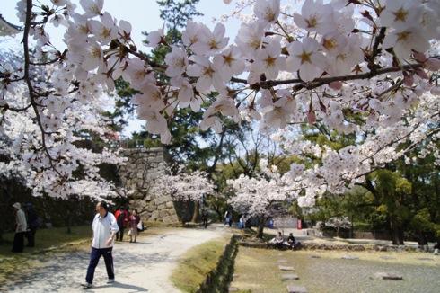 福山城の桜(お花見スポット) 画像4